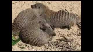 Dog Mating FAIL - GAY DOGS - सेक्स जानवरों - الحيوانات الجنس  - Goldene Hühner, Schönheiten