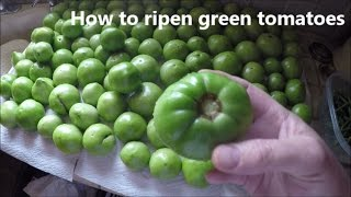 How to ripen green tomatoes off the plant
