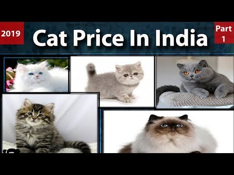 Cat Price In India l Cat Breeds In India l Pet cats price in India l Persian cat price in India