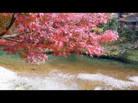 Relaxing Breeze Music & Beautiful Autumn Views | New breeze relaxing music