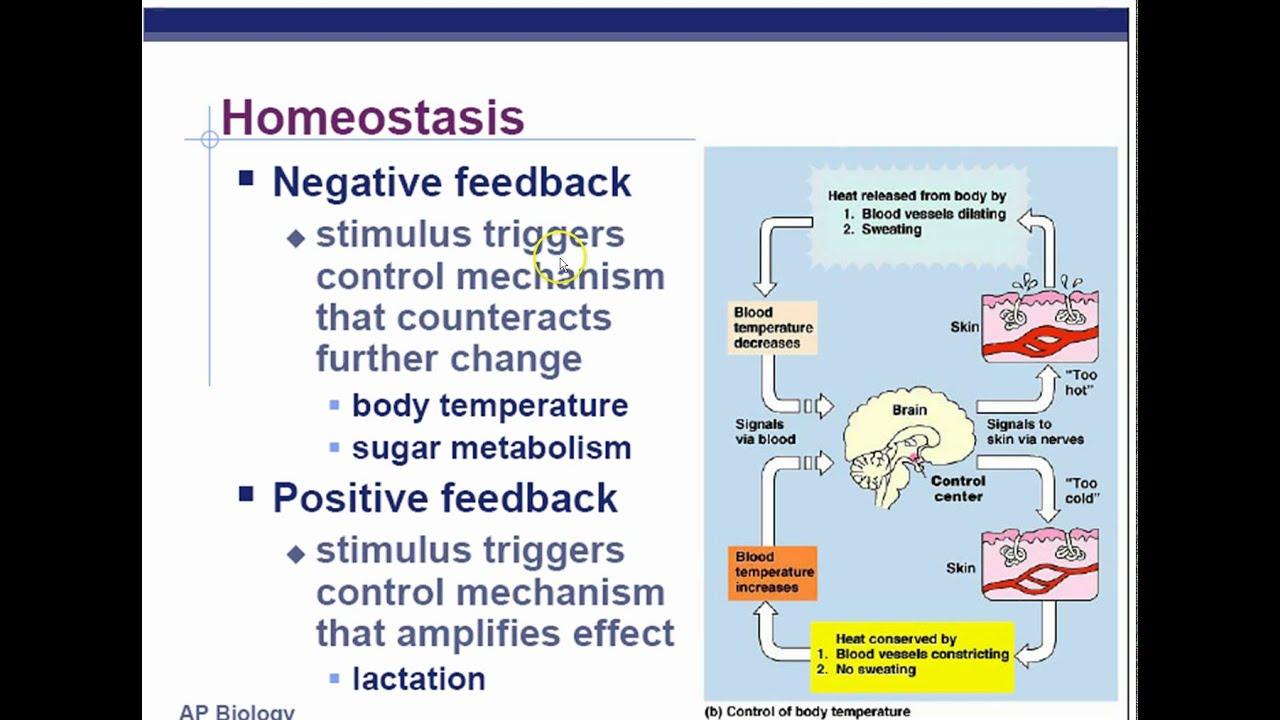 Ap Biology Chapter 45 Endocrine System Part 1