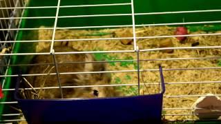 ТОП 5 самых опасных вещей для декоративного кролика!