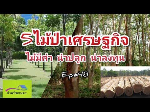 5ไม้ป่าเศรษฐกิจ น่าปลูกน่าลงทุน บ้านรักเกษตร Ep#48