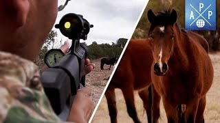 How Birth Control Is Saving Wild Horses
