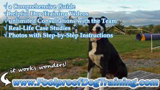 Canine Obedience Training Chesapeake Va