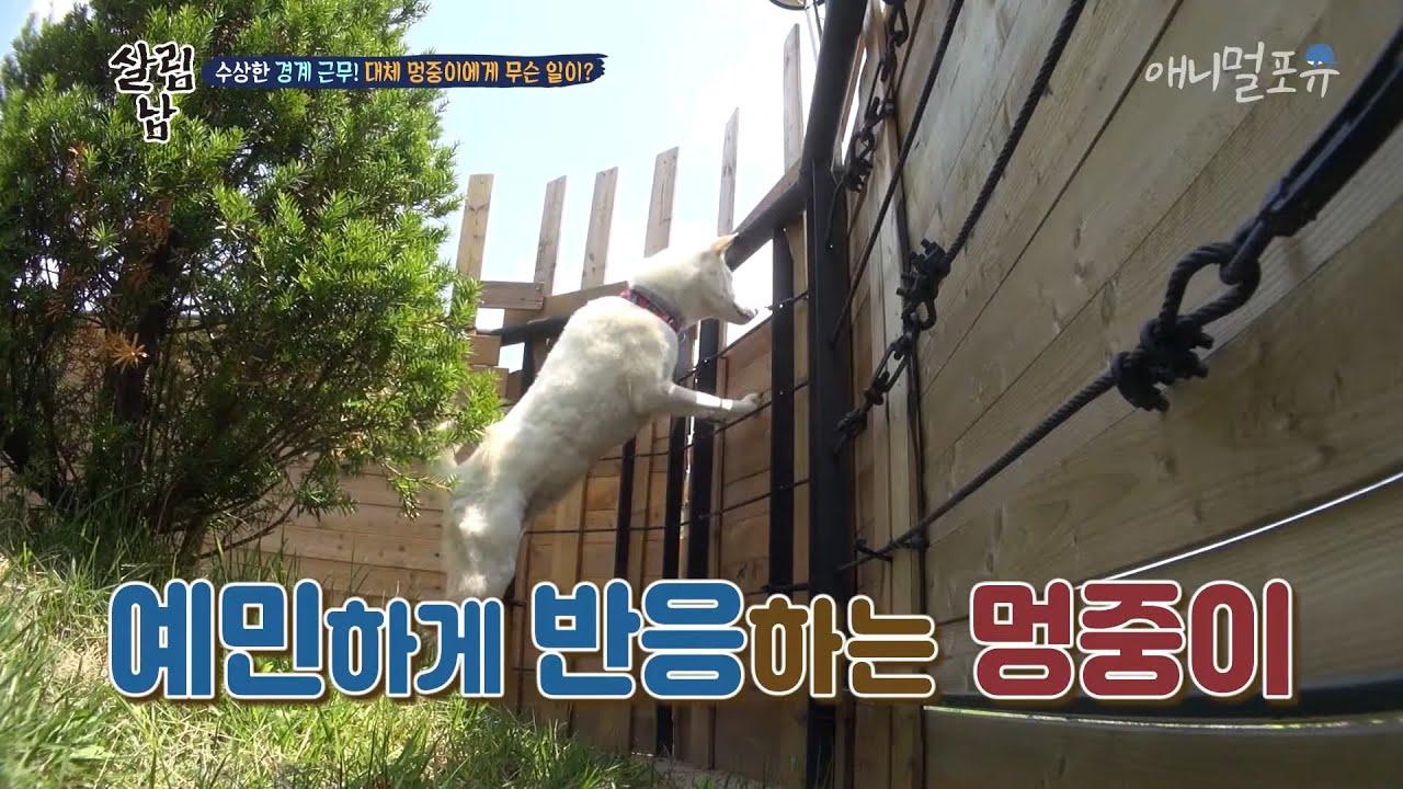 얌전하기만 한 줄 알았던 멍중이는 아직도 사춘기?, KBS 200620 방송