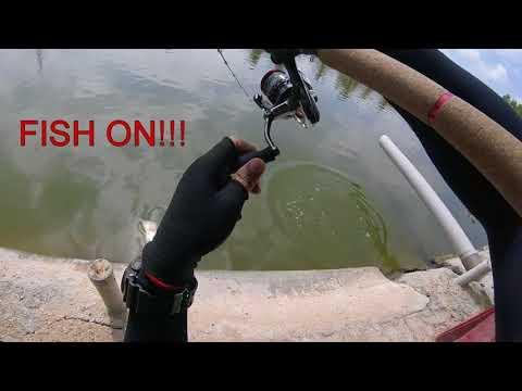 Kolam Pancing - Fishing Jenahak (Red Snapper) -Shimano Aernos 2500