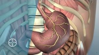 Wie funktioniert der Magen?