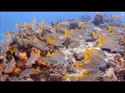 Canon EOS 70D Underwater Video Clips