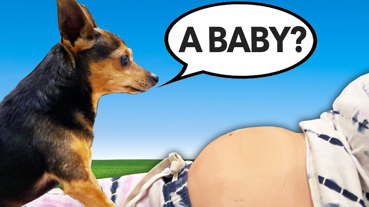 Telling Our Dogs We Are Pregnant to See How They React