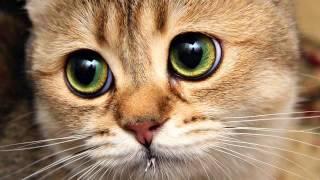 Музыка новинки 2014. Потрясающее видео. Слушать!(Вот это музыка! Супер!, 2014-11-03T23:13:58.000Z)