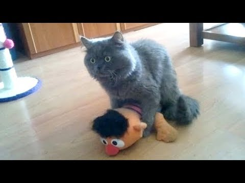 Warning: YOU MAY NEVER STOP LAUGHING - Super FUNNY ANIMAL compilation