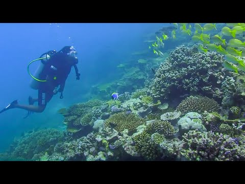 Underwater Restaurant & Reef Conservation - Indian Ocean wit