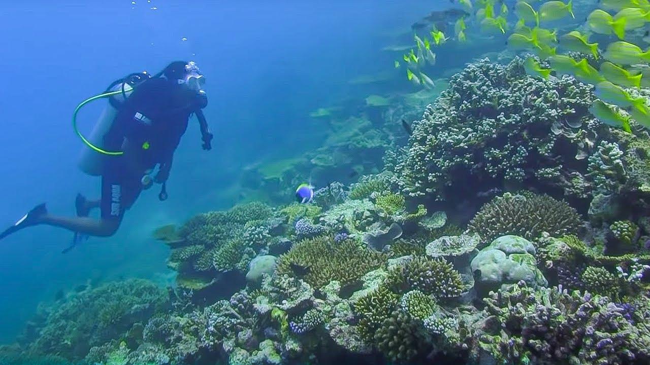 Underwater Restaurant Amp Reef Conservation Indian Ocean