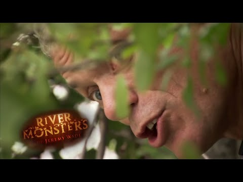 Spying On A Bold Wels Catfish | CATFISH | River Monsters
