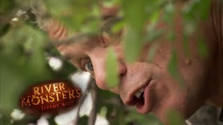 Encounter with a Bold Wels Catfish - River Monsters