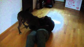 Dog Welcomes Home Soldier thumbnail