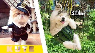 🐶😻 Những chú Chó Mèo dễ thương nhất Thế giới #1【Tik Tok Chó Mèo】