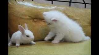 Белый котенок и белый кролик. Очень смешное видео