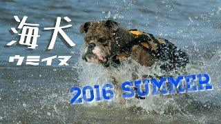 2016年の夏!新潟県の海水浴場、関谷浜で泳がせてきました。 ペットシャ...
