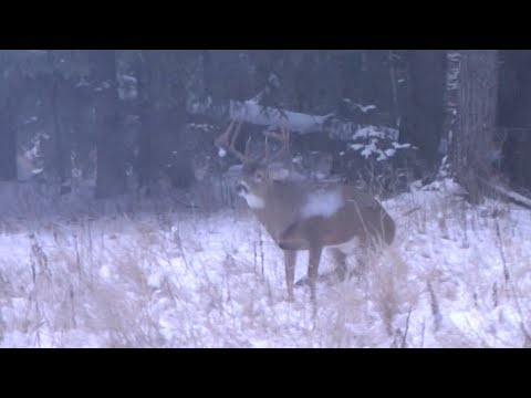 Hunting Alberta Whitetails In The Rut. Boom Dead!