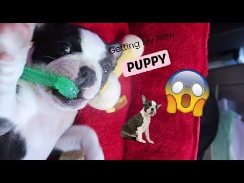 GETTING MY PUPPY VLOG (SO CUTE!!) - 동영상