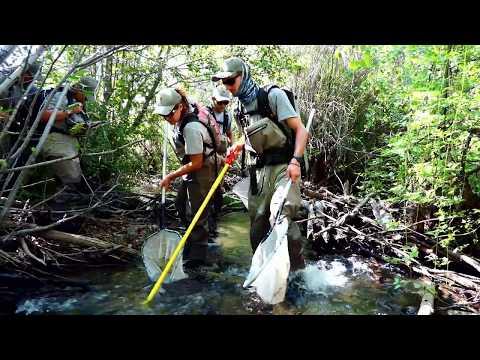 Seasonal Employment In Fisheries