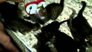 Коты-наркоманы