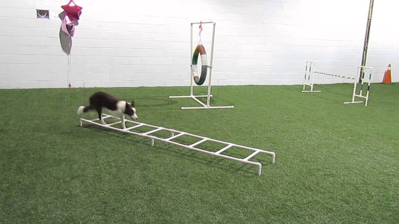 4 Paw Fitness With Sage Ladder Cavaletti Oct 4 2013 Youtube