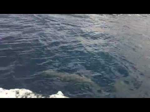 Costa Rica Sport Fishing Sportfishing Unlimited Zancudo