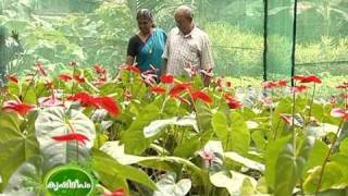 Success story on the anthurium cultivation undertaken by a housewife