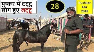पुष्कर मेले में प्यारा टट्टू / ख़च्चर | Cute Pony For Sale In Pushkar Mela Fair 2018  Horse Market