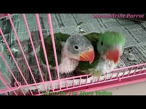parrot-ko-bolna-sikhaye