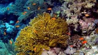 Fire coral facts: 13 Facts about Fire Coral