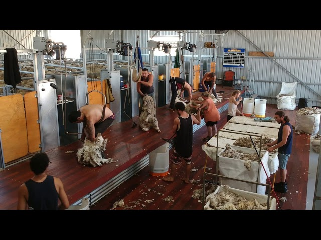 Shearing Shed Fit Out- Narrogin