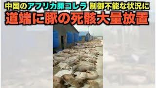 中国のアフリカ豚コレラは制御不能な状況に 道端に豚の死骸大量放置=福建省
