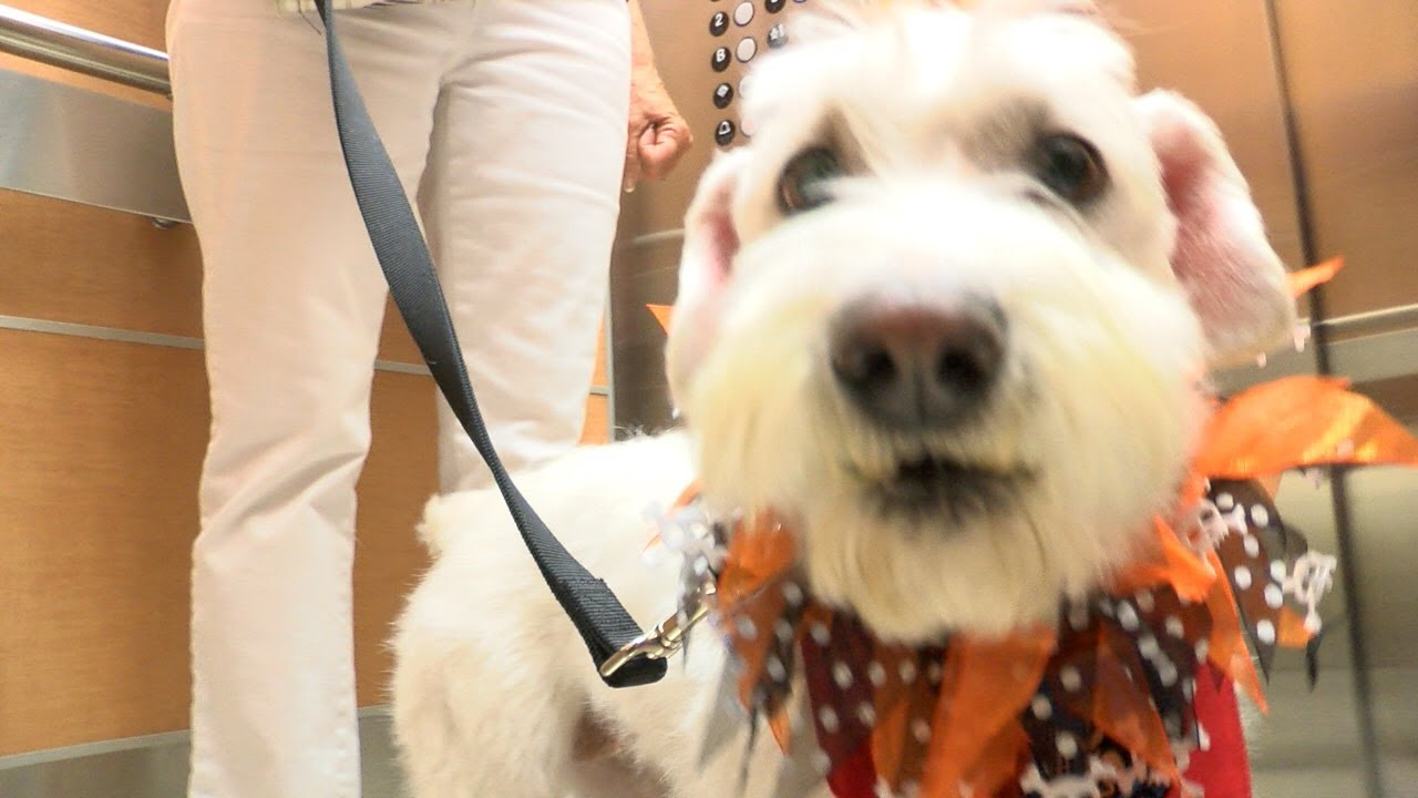 Riverside Therapy Dog Says I Love You To Cheer Up Patients And