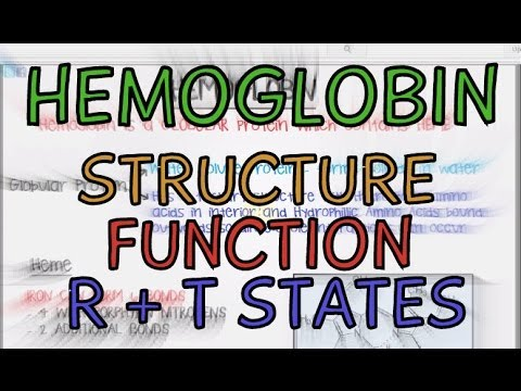 Hemoglobin - Structure - Function - R and T States