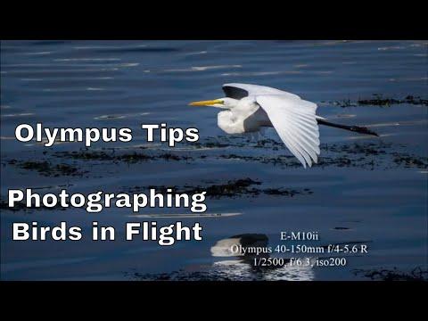 Olympus Tips: My Best Settings for Birds in Flight ep.69