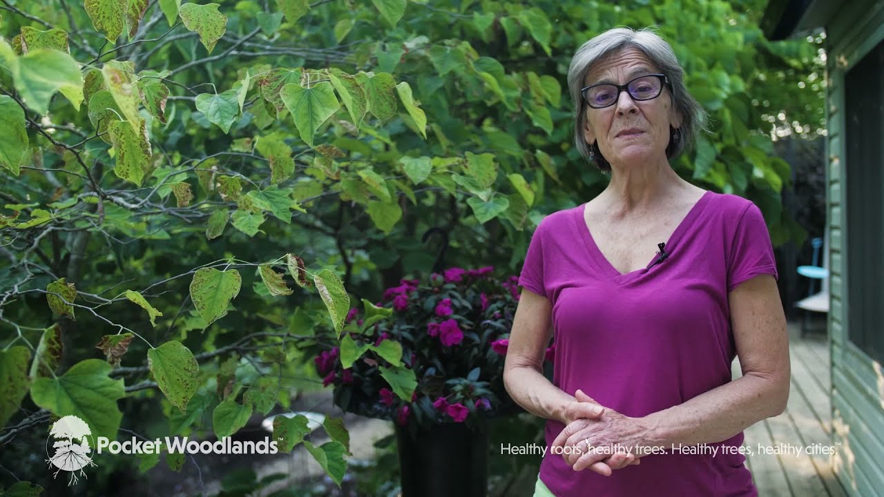 Biodiversity - The Third Video In Our Series