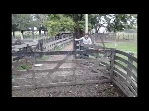 30-year-old wooden cattle handling facility