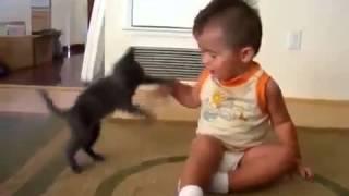 Котенок нападает на малыша