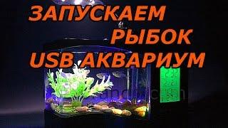 USB Аквариум из Китая Запуск Рыб Скоро ПОЛНЫЙ ОБЗОР