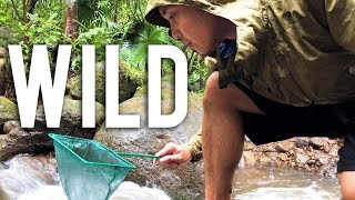 Catching Wild Guppies & Endlers in Hawaii