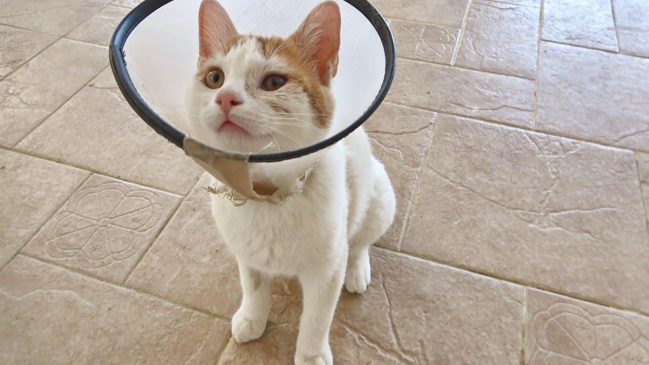 Kitten's Revenge on The Cone of Shame !!