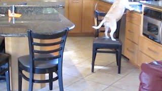 видео: Хозяева установили камеру на кухне, чтобы вычислить воришку