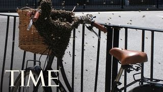 Swarm Of Bees Descends Upon London Neighborhood | TIME
