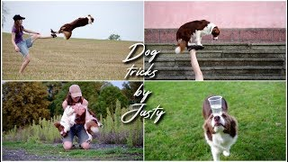 Amazing Dog Tricks by Border Collie JUSTY [4 years]