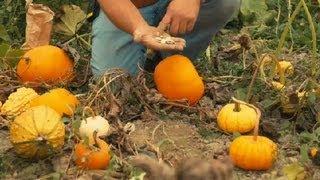 How to Grow Exotic Pumpkins : Pumpkin Gardening