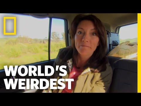 World's Weirdest Penis | World's Weirdest